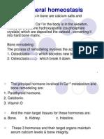 Mineral Homeostasis Bone