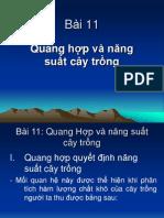 Quang Hop Va Nang Xuat Cay Trong