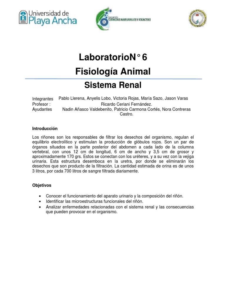 Marco Teórico. sistema renal