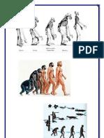 La evolución es el proceso por el que una especie cambia con el de las generaciones