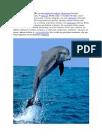DELFINES OCEÁNICO
