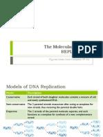 BIO3 - DNA Replication