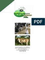 Plan de Negocio, Proyecto Agropecuario
