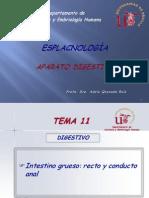 Anat II- 11. Intestino Grueso. Recto y Conducto Anal Curso 2012-13