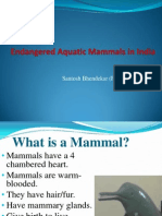 Endangered Aquatic Mammals