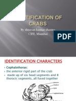 Identification of Crabs