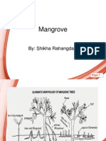 Endangered Mangroove