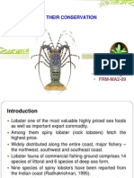 Lobster and Their Conservation1