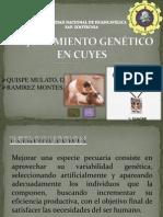 mejoramiento genético en cuyes