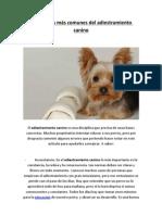 Los Errores Mas Comunes Del Adiestramiento Canino