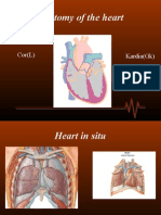 Cardiac Anatomy