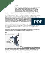 Biologi Mekanisme Pernapasan Ikan
