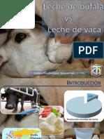 Leche de Búfala vs Leche de Vaca