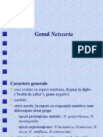 II Neisseria 2009