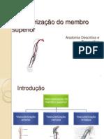 Vascularização do Membro Superior