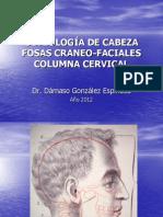 Osteología y Artrología del cráneo y de la cara.
