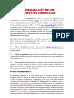 ESPECIALIZACIÒN DE LOS HEMISFERIOS CEREBRALES