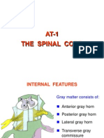 AT1 - Spinal Cord (12-13) Internal Features