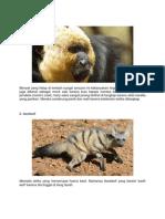 10 hewan mamalia langka