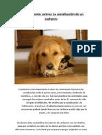 Adiestramiento canino - La socializaciýýn de un cachorro