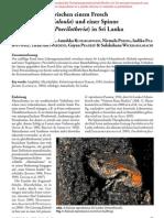 Symbiotic relationship between frog and spider (Sri Lanka)