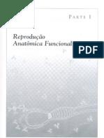 Reproduçao anatomica funcional