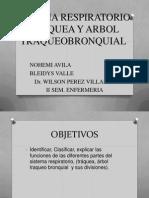 Traquea y Arbol Bronquial