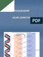mekanisme alur genetik