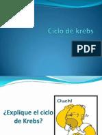 Cliclo de Krebs