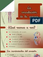 4. La circulación de la sangre