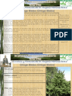 139 Ginkgo.pdf