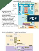 Metabolisme Karbohidrat, Protein, Lemak