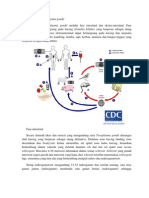 Siklus Hidup Toxoplasma Gondii