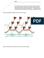 Scheme de Plantare Pentru Tomate