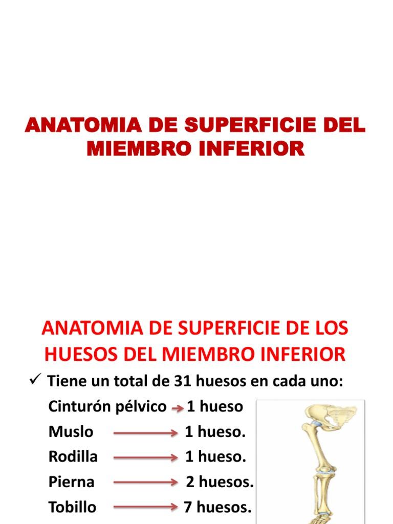 Anatomia de Superficie Del Miembro Inferior