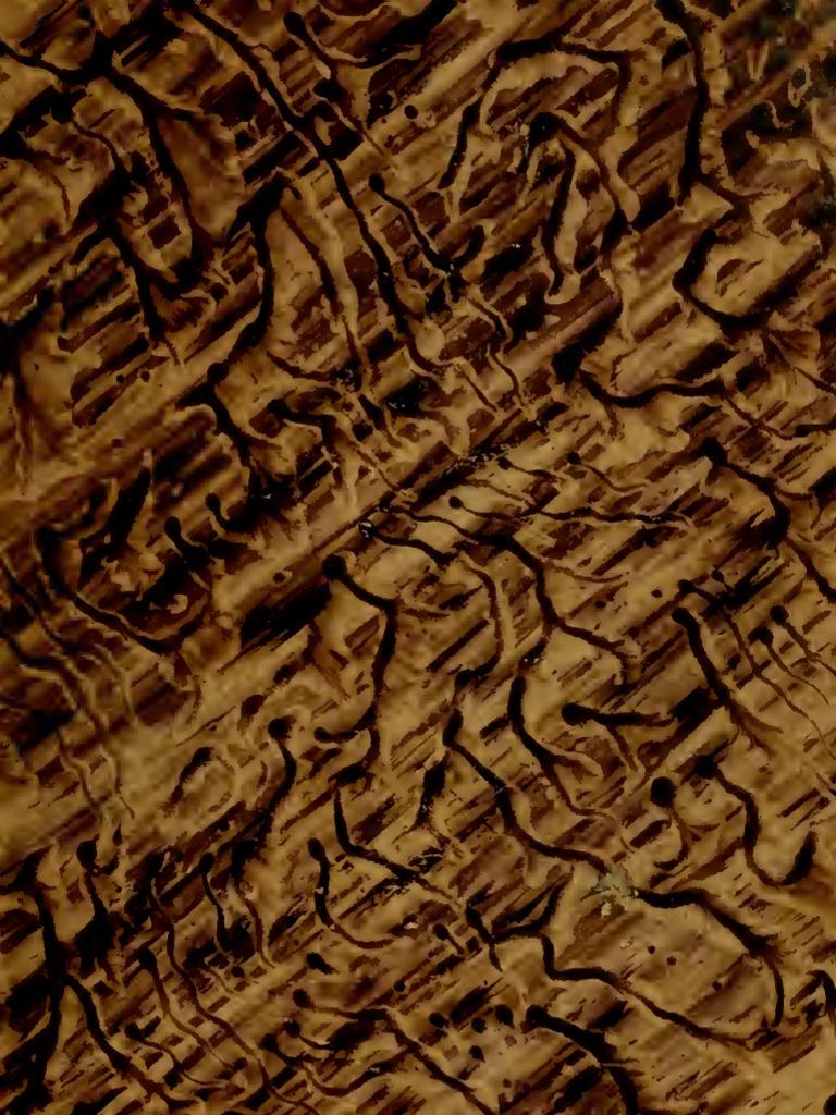 Astounding Holz Altern Natronlauge Referenz Von