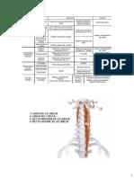 Anatomía del cuello parte 1