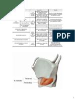 Anatomía del Cuello parte 3