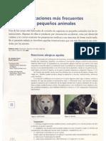 intoxicacion pequeños animales