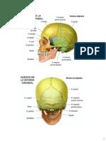 Anatomía del Cuello parte 7