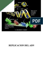 Duplicacion y Replicacion Del DNA