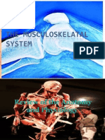 The Musculoskelatal System