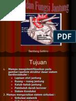 Struktur Dan Fungsi Jantung.ppt Revisi