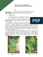 A viticultura madeirense