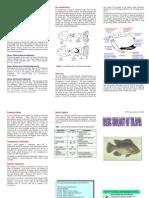Basic Biology of Tilapia