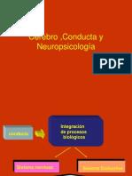 Cerebro ,Conducta y Neuropsicología