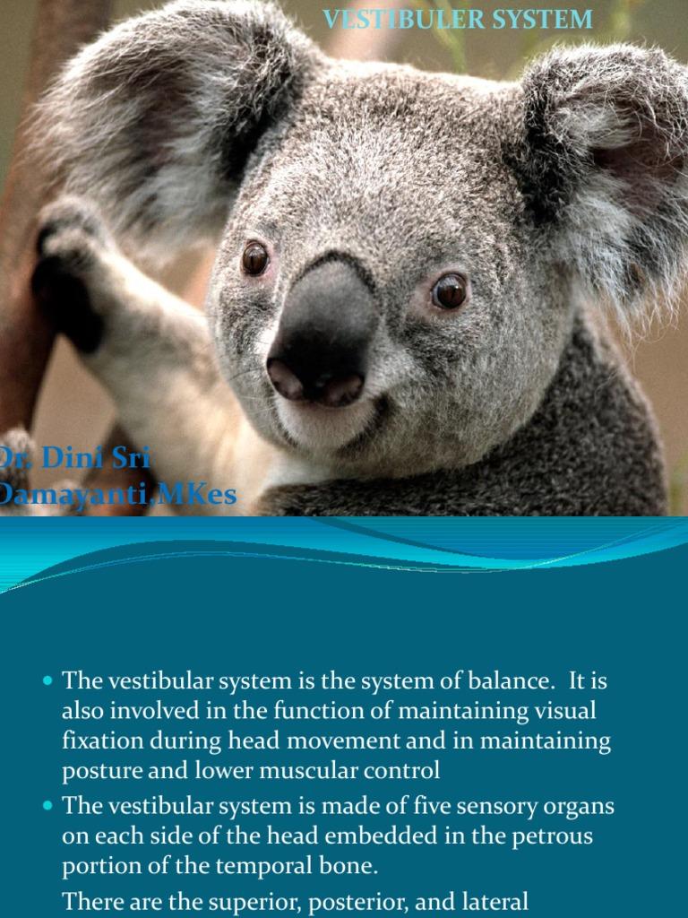 Anatomy and Physiology of Vestibuler System   Vestibular System ...