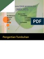 morfologi melati