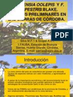 Sab 2005flourensia Oolepis y f