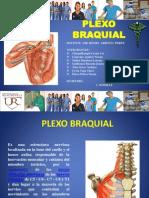 plexo braquial 2